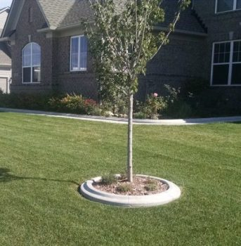concrete edging tree carmel indiana